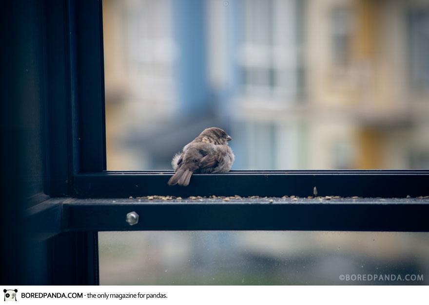 found-blind-baby-sparrow-below-my-balcony-880-1