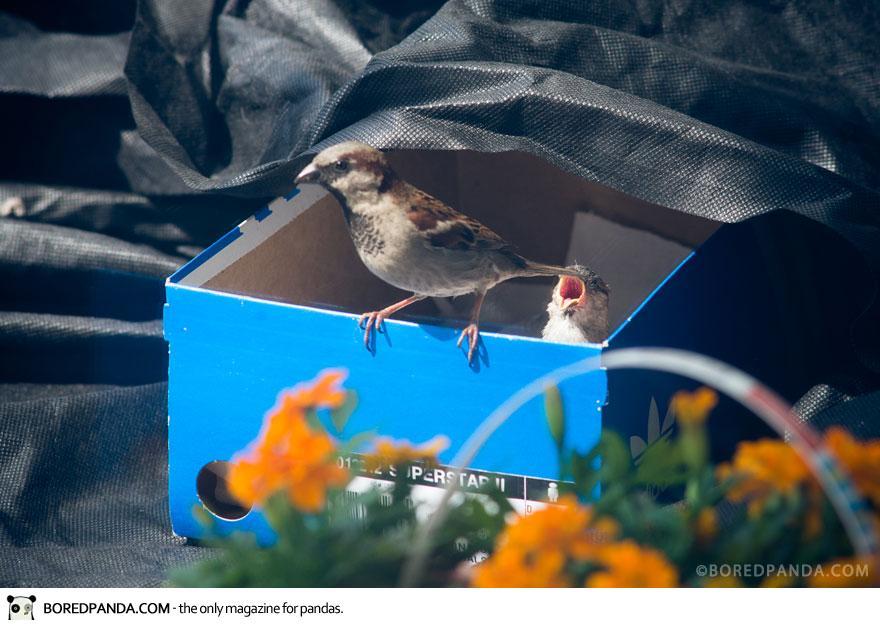 found-blind-baby-sparrow-below-my-balcony-880-12