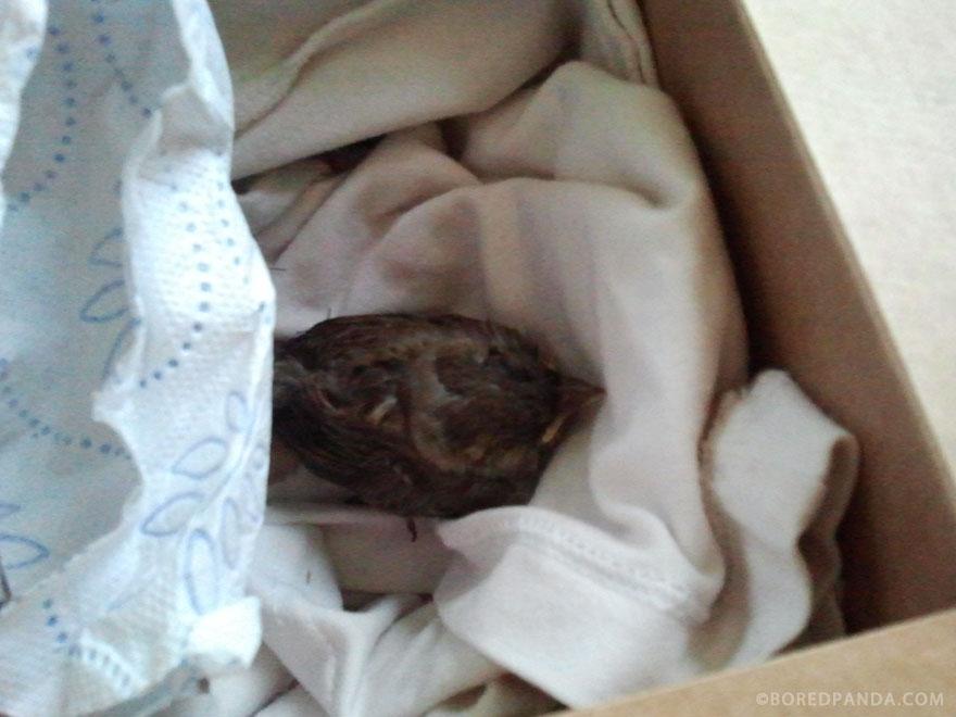 found-blind-baby-sparrow-below-my-balcony-880-5