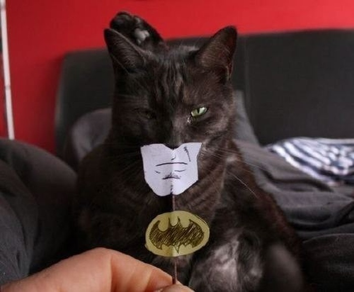 catman_20