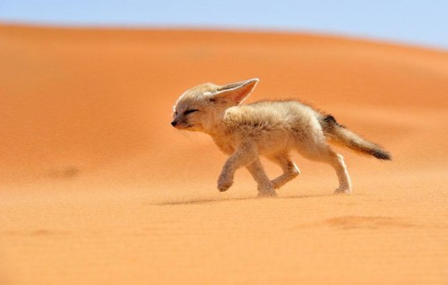 amazing-fox-photos-12