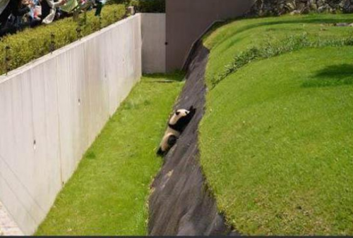 pandaadventure