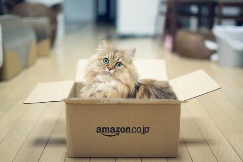 ben-torode-amazon-animals-cats-2528839-480x320