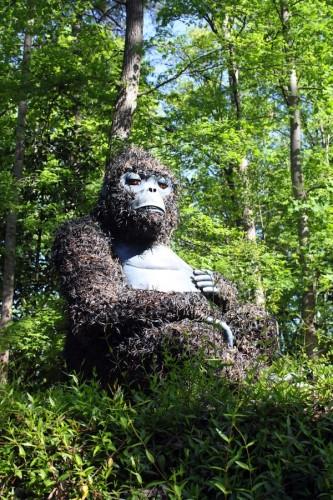 gorilla_6159