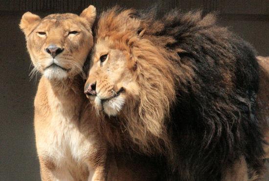 動物園デートで脱マンネリ♡彼にも動物にも癒されて♪