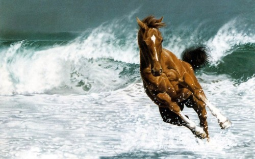 Beautiful-Horse-horses-22410583-1280-800
