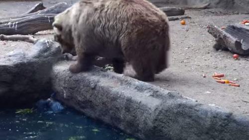 bearclow