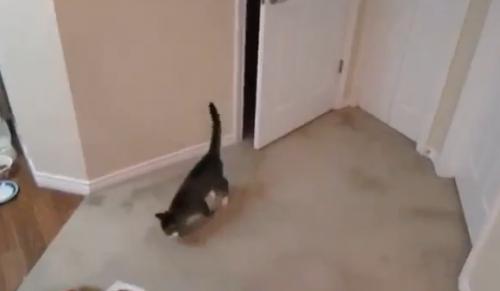 catdoor22