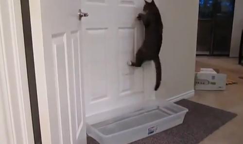 catdoor4