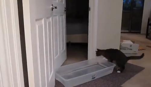 catdoor5