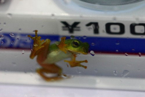 frog (4)