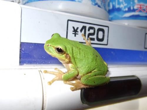 frogvanding (3)