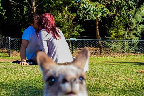 kangaroo1 (12)