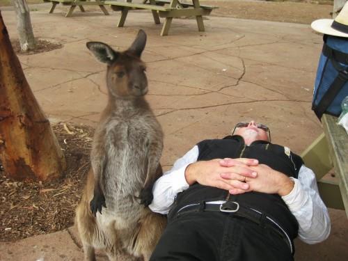 kangaroo1 (4)