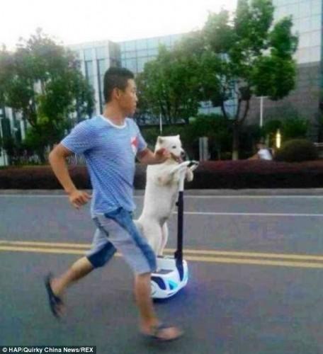segwaydog (1)
