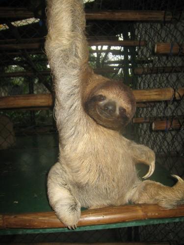 sloth1 (10)
