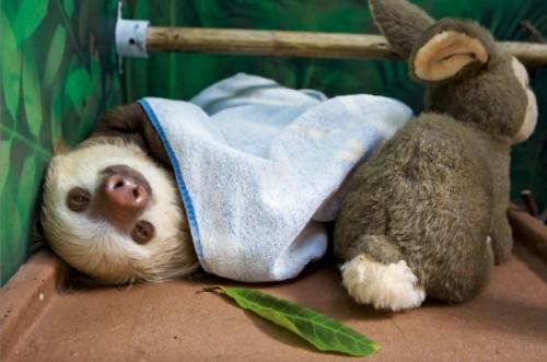 sloth1 (23)