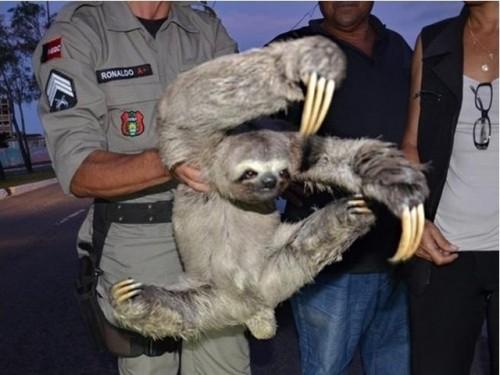 sloth1 (6)