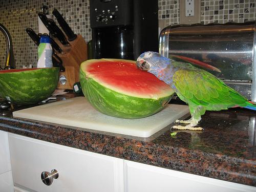 watermelon (17)