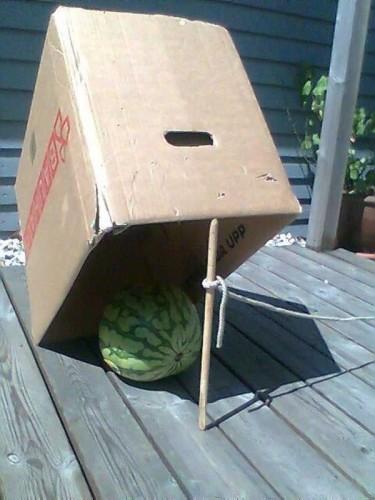 watermelon (18)