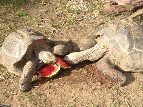 watermelon (19)