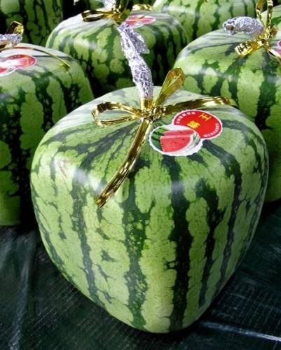 watermelon (9)
