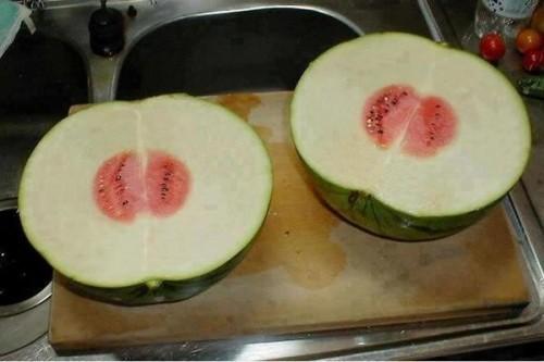 watermelon22 (1)