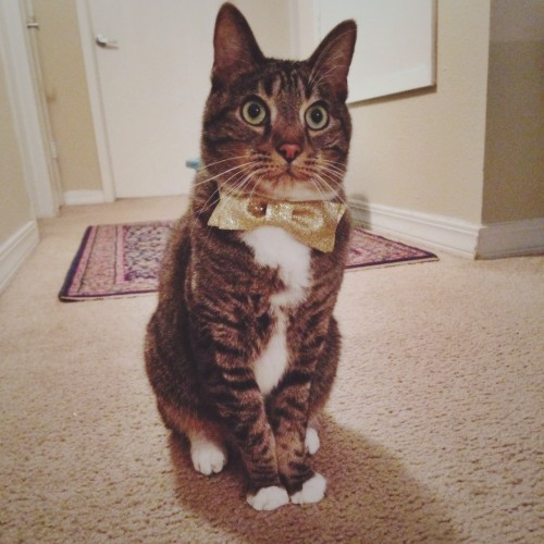 catmonday (1)