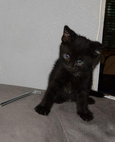 catmonday (10)