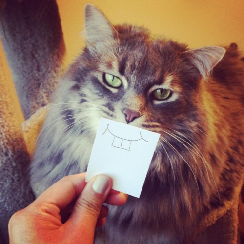 catmonday (12)