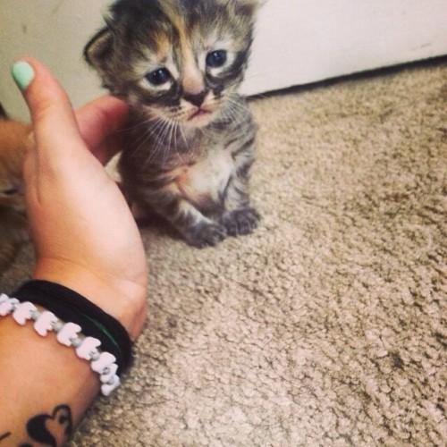 catmonday (13)