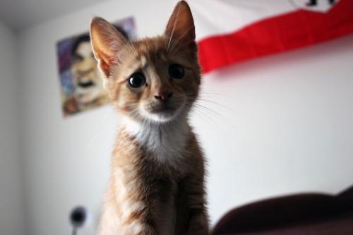 catmonday (14)