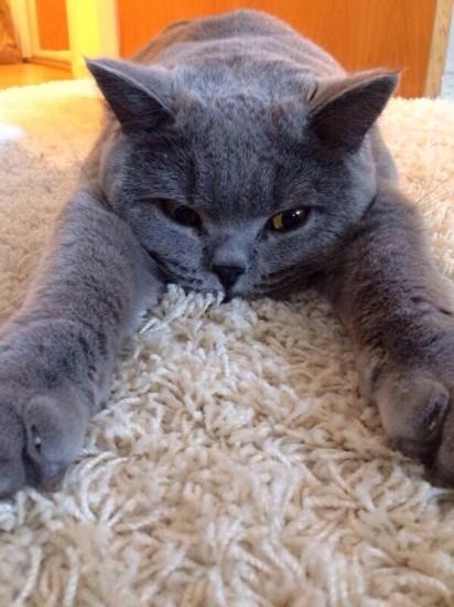 catmonday (4)