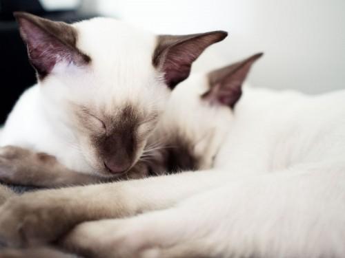 catmonday (6)