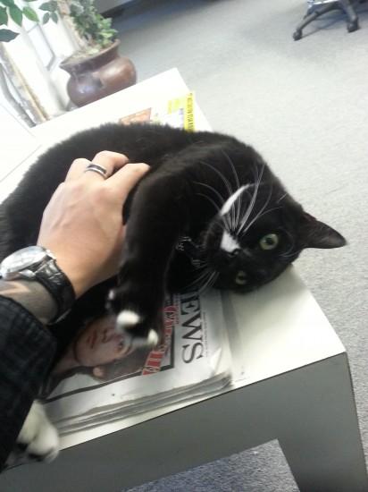 catmonday (9)