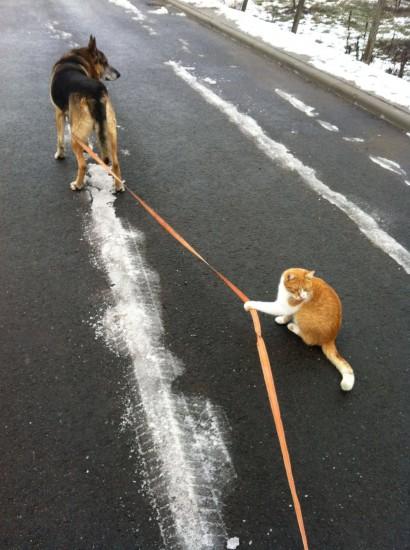 catsanddogs (11)