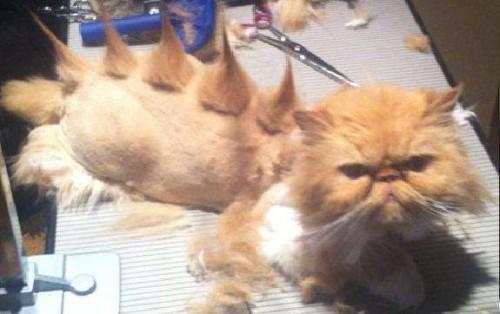 funnycatscut (10)