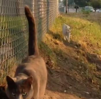 horncat2