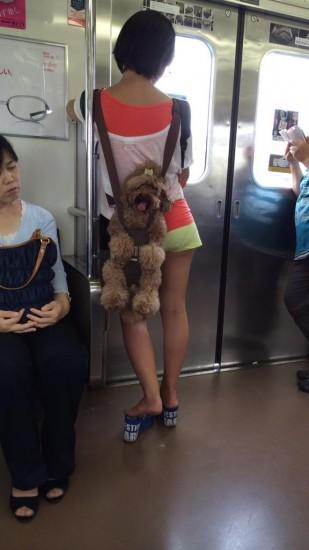 onlydog (1)