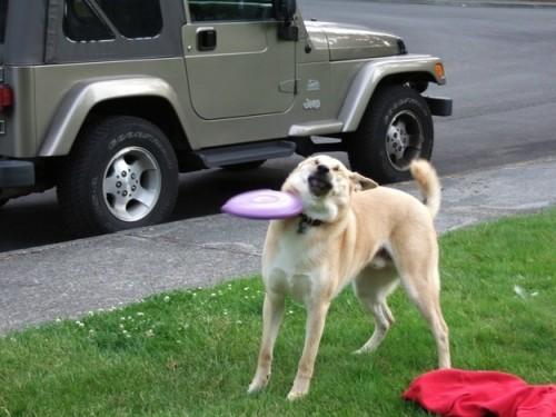 onlydog (14)