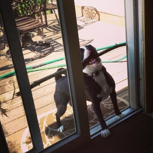 onlydog (17)