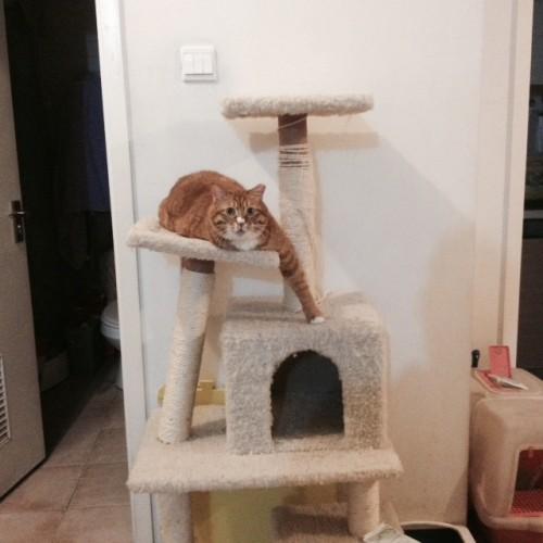 catsdanger (5)