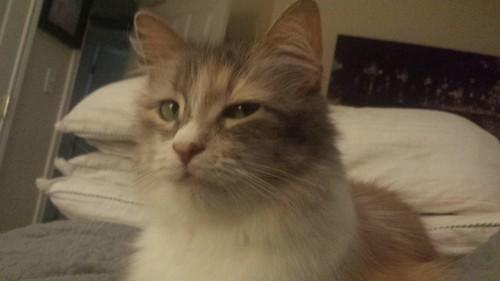 catsdanger (6)