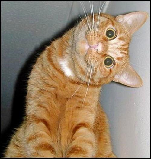 funny-cat-05