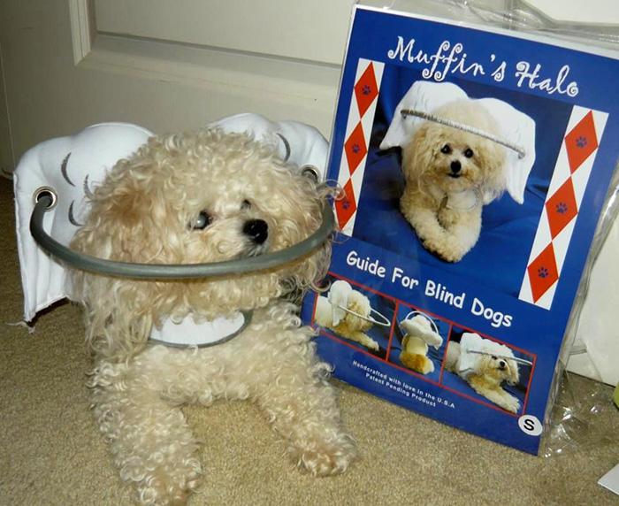 blind-dog-safety-device-muffins-halo-5