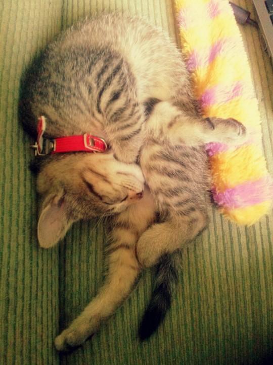 cat_funny (10)