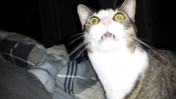 cat_funny (11)