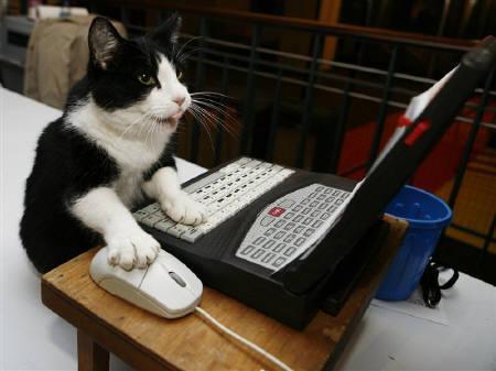 cat_helper (10)