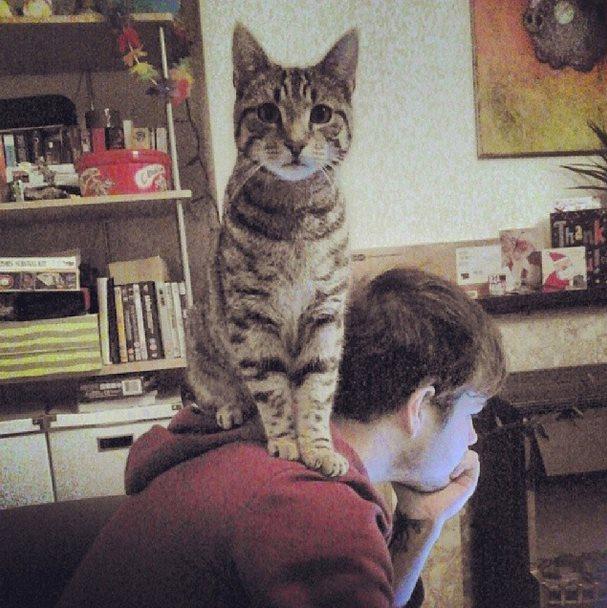 cat_helper (13)