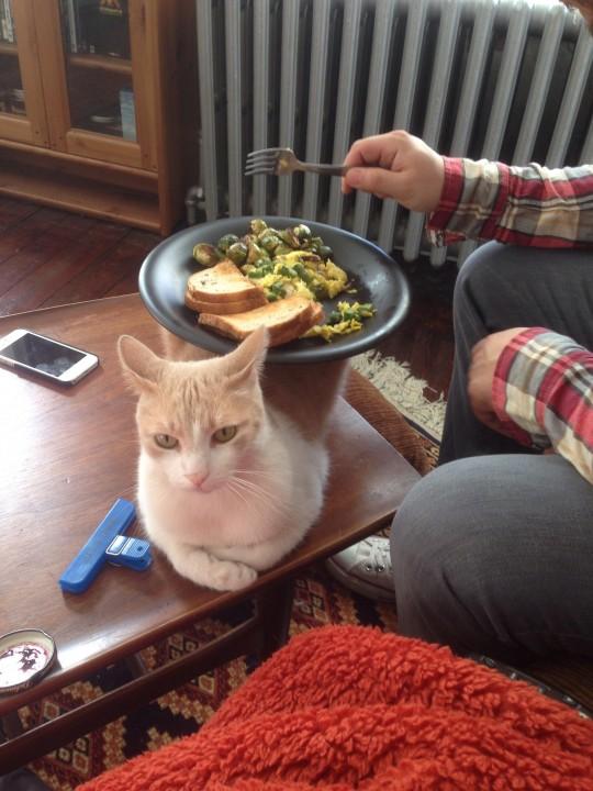 cat_helper (14)